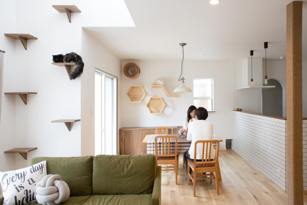猫と楽しく暮らす家 アイキャッチ画像